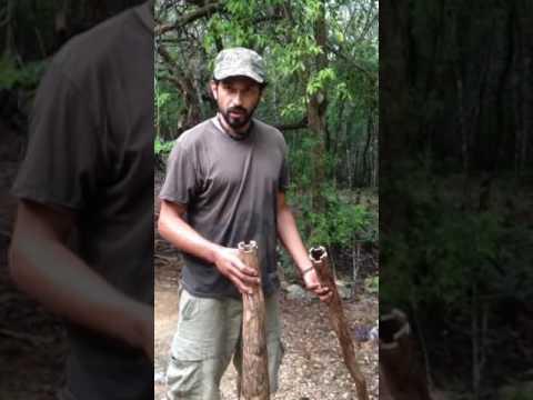 Didgeridoo híbrido de agave
