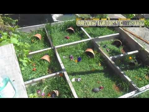 Outdoor Hatchling Tortoise Enclosures