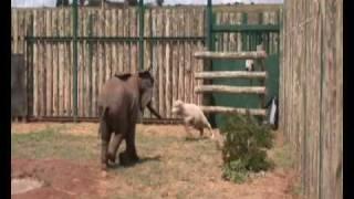 Temba the orphan elephant
