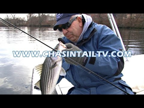 River Fishing for Striped Bass with Soft Plastic Baits | Chasin' Tail TV