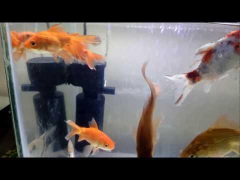 basic fishtank aquarium setup in Hindi.
