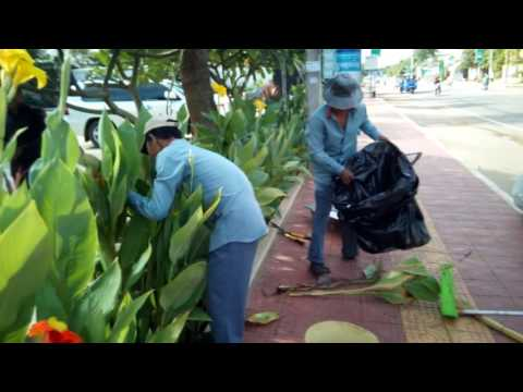How to keep flower tree good : need  to do like that