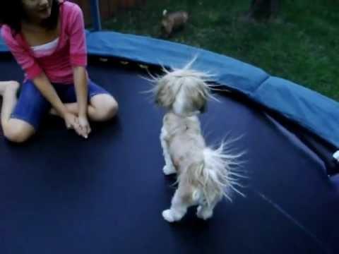 Static Electricity Dog:)