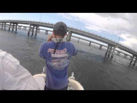 Cobia Fishing Virginia