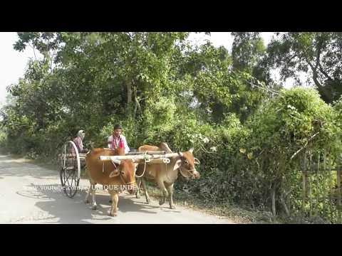 Few Moments  of village life in India // भारत में ग्रामीण जीवन के कुछ पल