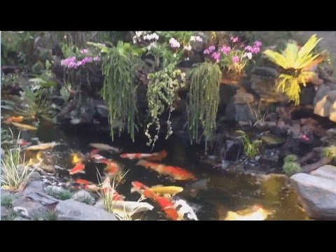 Best koi pond design no1