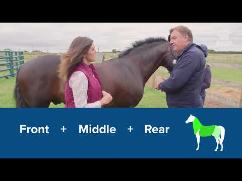 Is Your Horse Overweight?