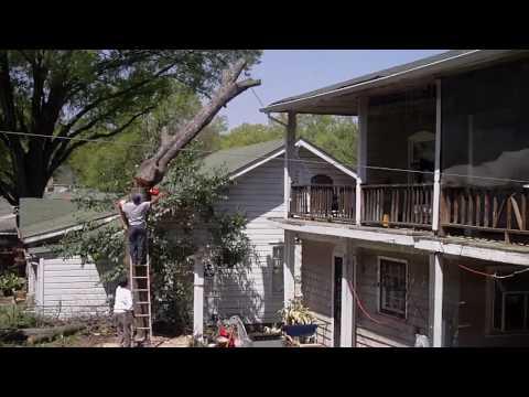 Tree Cutting 101