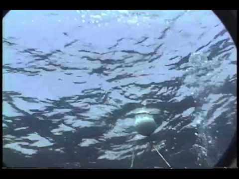 Remora Attack Bahamas Diving
