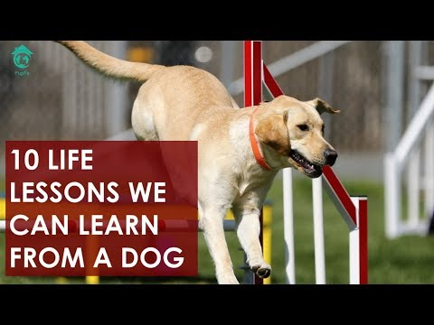 10 Life Lessons we can learn from a dog