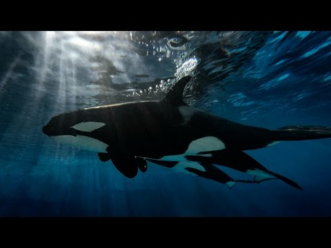 Meet Makani   SeaWorld®