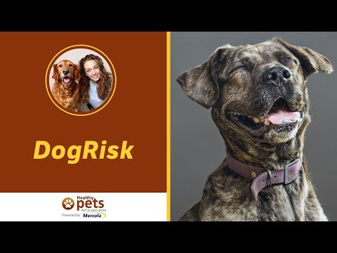 Dr. Becker Invites You to Support DogRisk