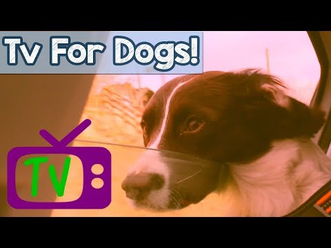 VIDEOS FOR DOGS! TV for Dogs, Hours of Entertainment for Dogs and Puppies with Relaxing Music! 🐕 📺