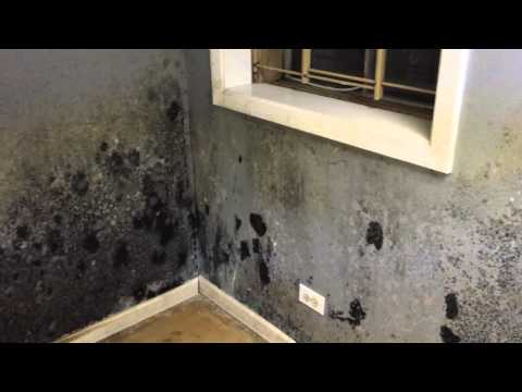 Black Basement Mold Before You Even Know It Frankfort, IL