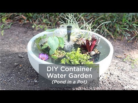 DIY Container Water Garden (Pond in a Pot)