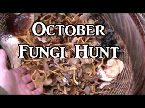 Mid October Fungi Hunt (UK)