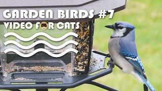 MOVIE FOR CATS - Garden Birds #7. Bird Video for Cats.