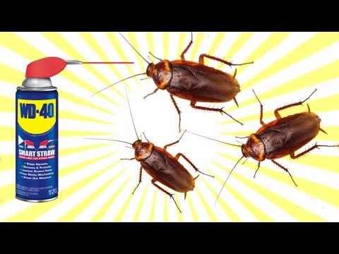 HOW TO KILL COCKROACH WITH WD-40 SPRAY !!!