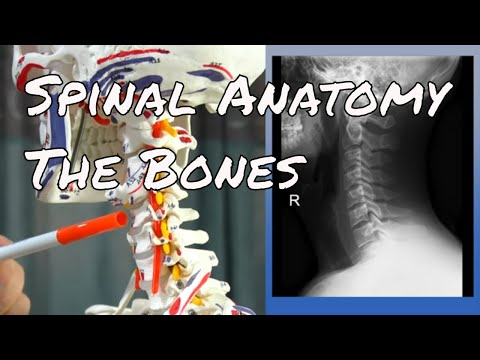 Spinal Anatomy The Bones - Motion Specific Release