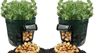 Believe It Or Not, This Can Grow Tons Of Potatoes in a Trash Bag