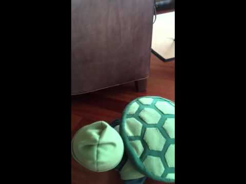Baby in turtle costume