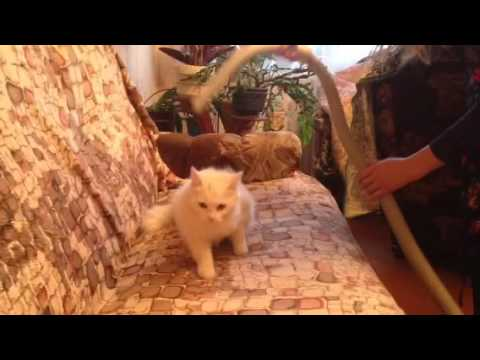 How to clean cats fur