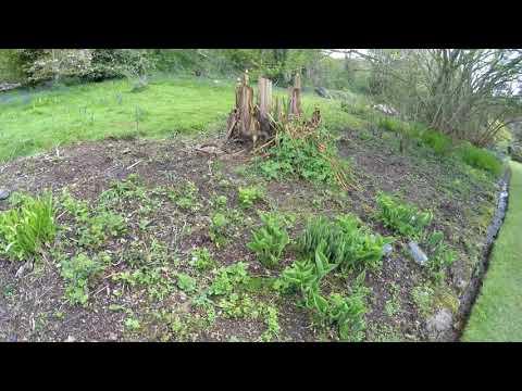 Penberth Gardens