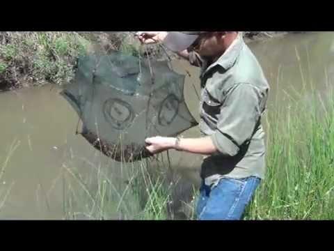 Six Sided Umbrella Minnow / Crawfish Trap Check Pt. 2