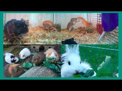 Collecting Forage & Bonding All 5 Gerbils!