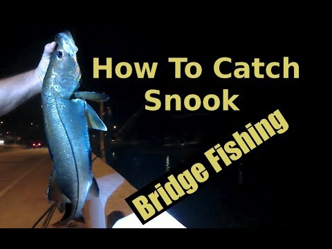 Night Bridge Fishing With Shrimp Catching Snook  On Jigs