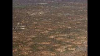 Mysterious fairy circles in Namib desert explained at last
