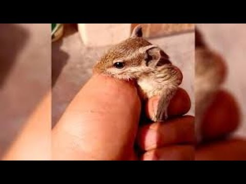 Man gets awesome surprise after saving baby squirrel