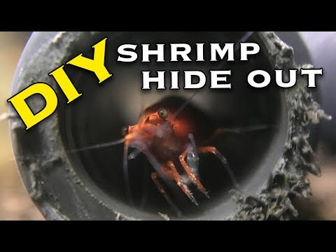 How to Make Cheap Shrimp Tunnels