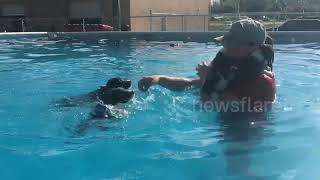 Fall in love with these adorable puppies learning how to swim for the first time