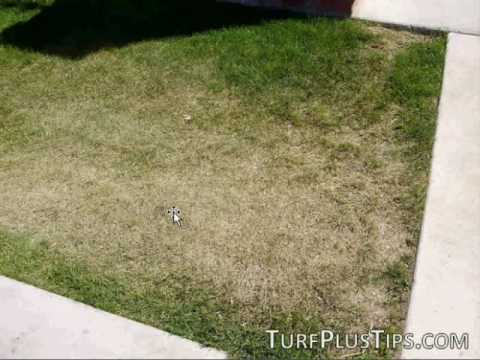 Dry Grass - Drought in your lawn