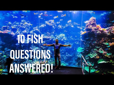 I ANSWER 10 QUESTIONS ABOUT FISH!