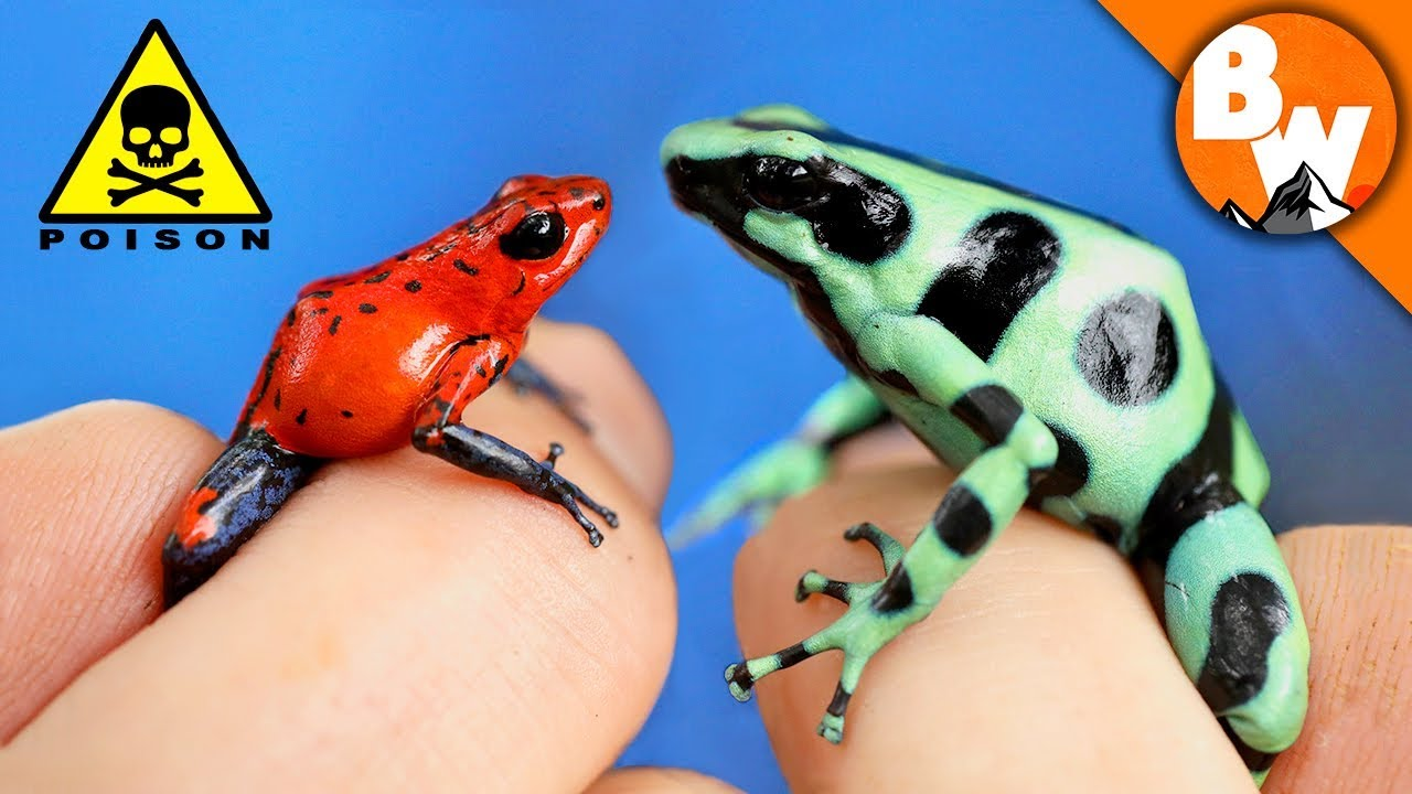 Which Poison Frog Can Kill You?