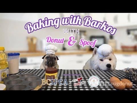 Baking with Barkos (BCSPCA National Cupcake Day)