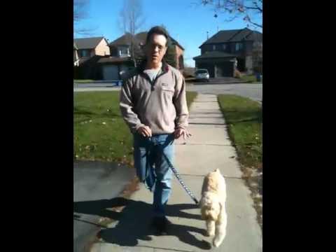 Dog Walking Tip
