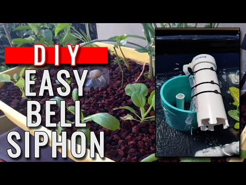 DIY STORY aquaponic: easy auto bell siphon