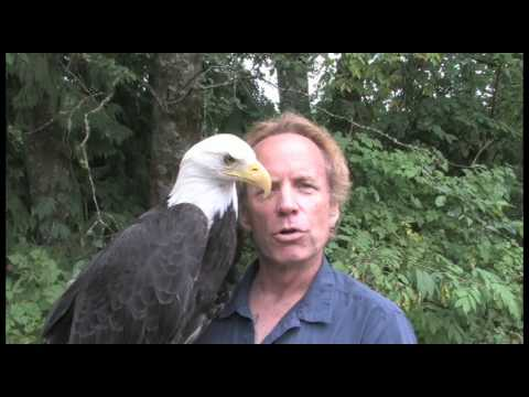 Jeff Guidry and His Eagle Named Freedom