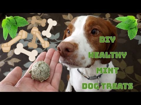 Mint Dog Breath Treats ll DIY Dog Treats (#1)