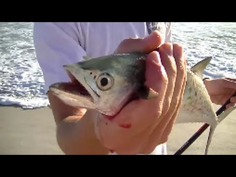 Catching Spanish Mackeral and Bluefish On the Beach in Florida