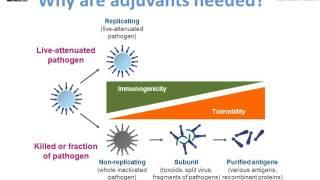 Antigens, adjuvants and excipients - M. Pfleiderer