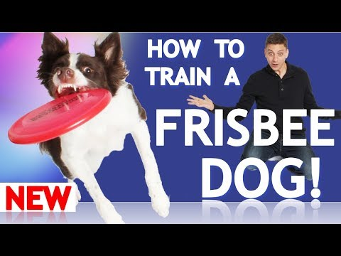 How to Train Your Dog to Play Frisbee!