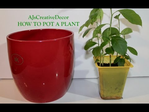 Potting An Indoor Plant