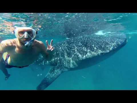 Whaleshark Snorkeling/Swimming Oslob Cebu, Philippines