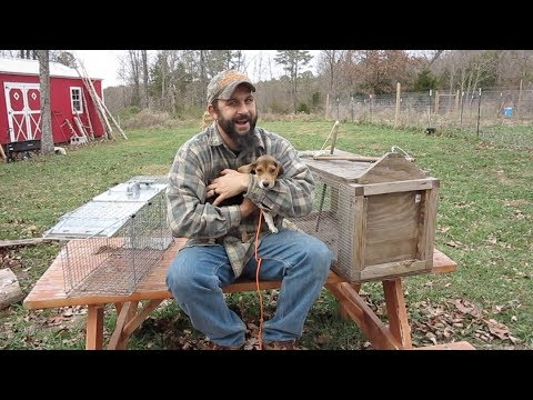 Havahart vs. Homemade Trap.  Which is Better for Trapping Raccoons?