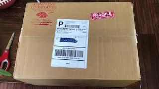 Houseplant unboxing.  Plant mail Pistils Nursery Hoya Obovata