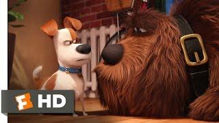 The Secret Life of Pets - Max Meets Duke Scene (2/10)   Movieclips